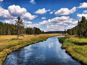 Un bonito paisaje en el Parque Nacional Yellowstone
