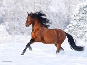 Caballo galopando por la nieve