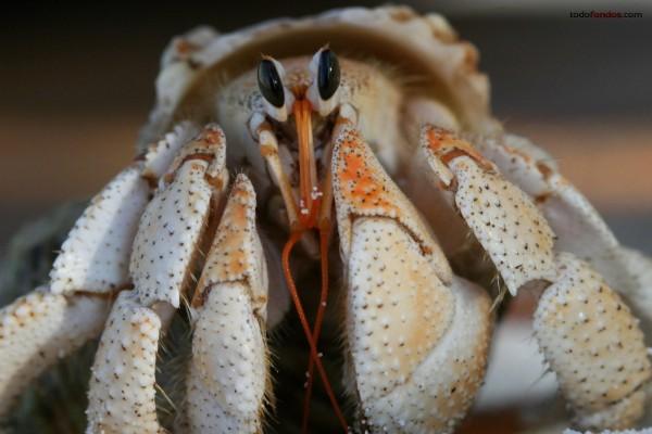 El rostro de un cangrejo