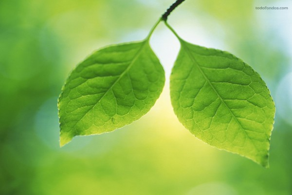 Un par de hojas