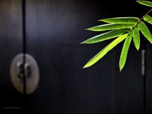 Postal: Hojas de bambú