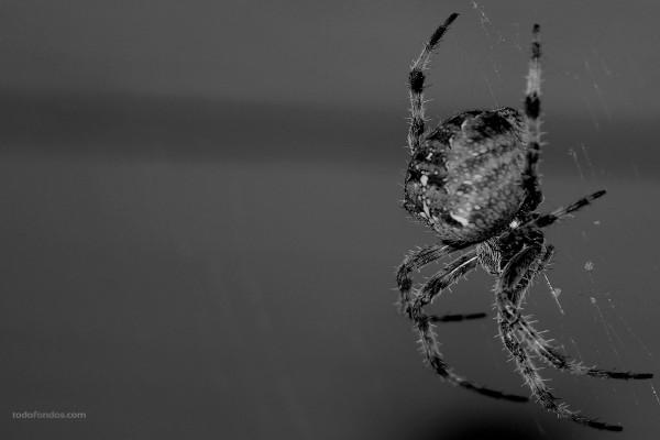 Araña tejiendo su tela