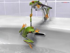 Ranitas probando el agua