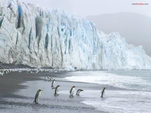 Postal: Pingüinos rey