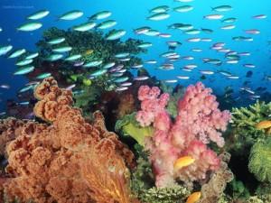 Postal: Arrecife de coral