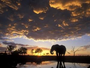 Postal: Silueta de elefante