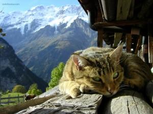 Postal: Gato descansando