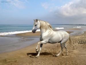 Caballo blanco en la playa