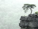Árbol al borde del precipicio