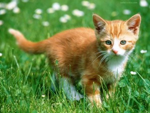 Postal: Gatito en la hierba