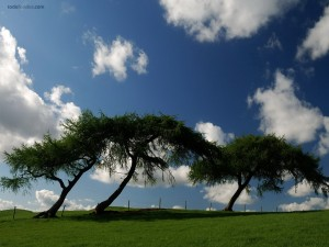 Postal: Árboles con el tronco torcido