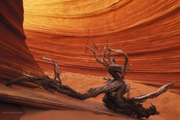 Paredes de roca erosionada