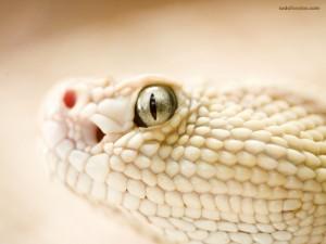 Postal: Serpiente blanca