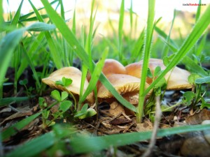 Setas entre la hierba