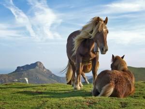 Postal: Caballos en la montaña