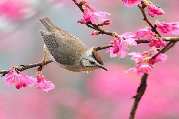 Pájaro entre flores rosas
