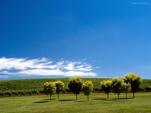 Postal: Campo verde bajo un cielo azul