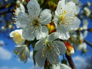 Postal: Flores frutales