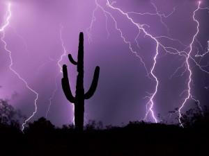 Postal: Cactus entre rayos