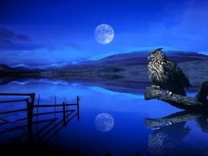 El buho y la Luna