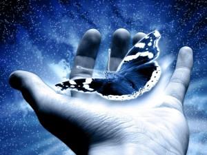 Una mariposa en la mano