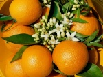 Naranjas con sus flores de azahar