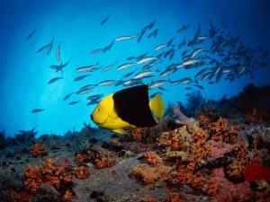 Pez amarillo y negro