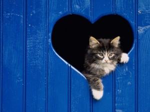 Postal: Gatito asomado por una ventana con forma de corazón