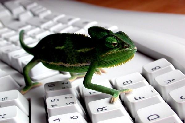 Un camaleón por el teclado