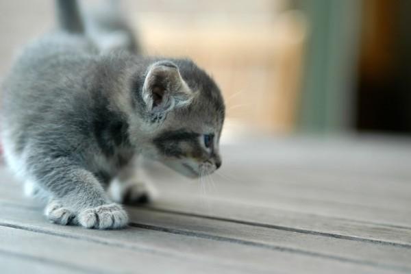 Gatito explorando