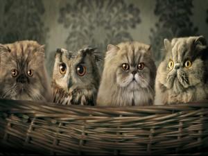 Tres gatos y un buho