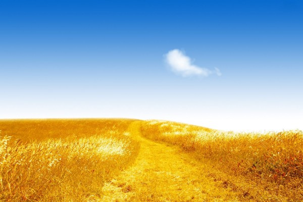 Campo dorado bajo cielo azul