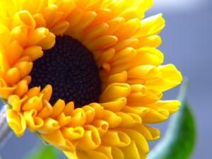Postal: Flor de pétalos amarillos