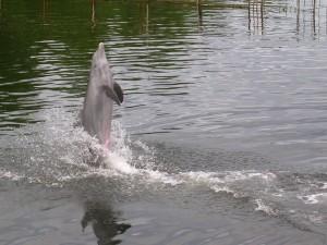Delfín de pie sobre el agua