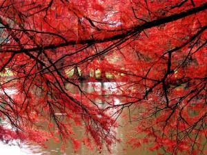 Postal: Ramas de hojas rojizas