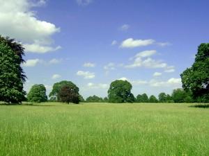 Campo y cielo