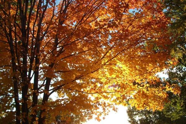 Sol entre las hojas