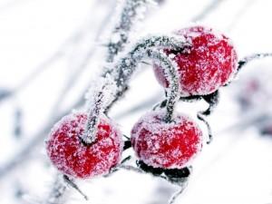 Frutas heladas
