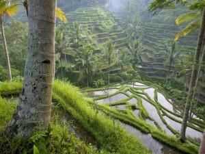 Vegetación y palmeras