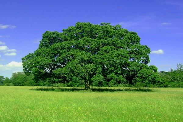 Árbol verde y frondoso