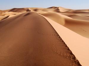 Postal: Huellas en la arena del desierto