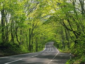 Postal: Curvas entre árboles