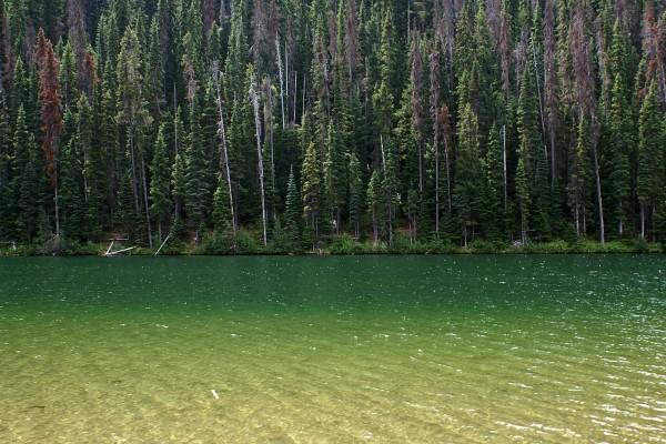 Verde reflejado