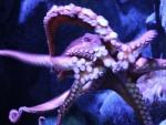 Estrella de mar morada