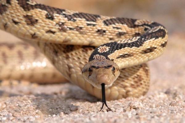 La serpiente te mira