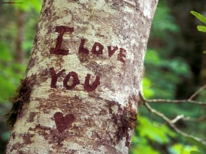 Postal: Te amo, escrito en un árbol