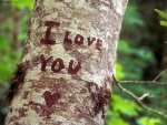 Te amo, escrito en un árbol