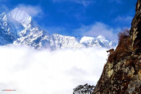 La cabra en la montaña