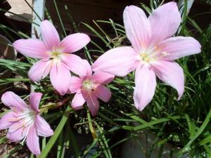 Postal: Florecillas