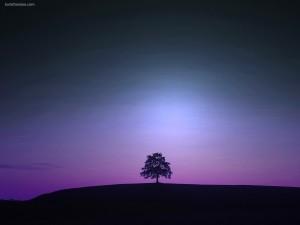 Árbol sobre luz violeta